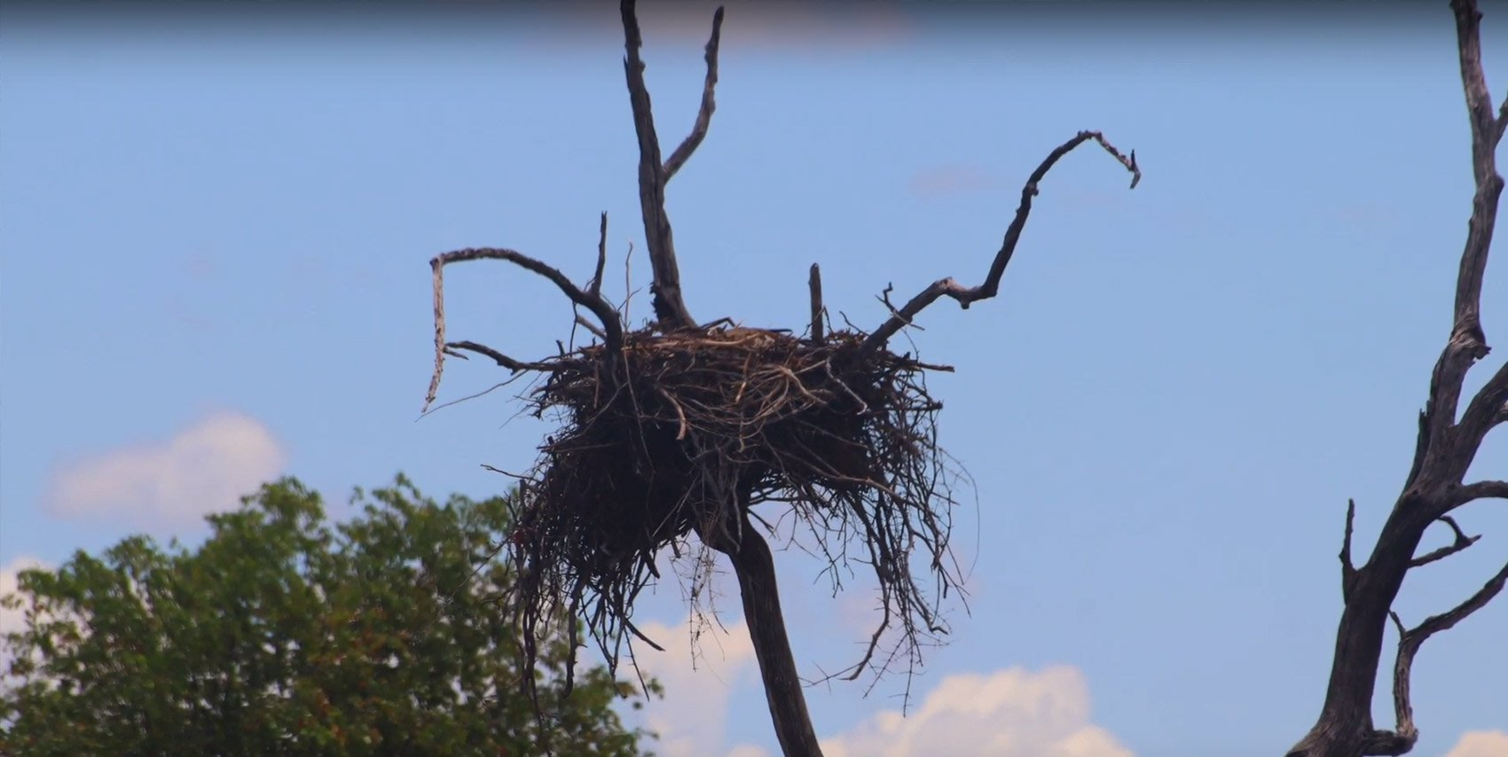 Where Eagles Go to Fish the Sunken Trees of Lake Kariba