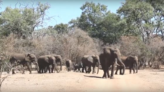 How to Repel Elephants from Baobab Trees