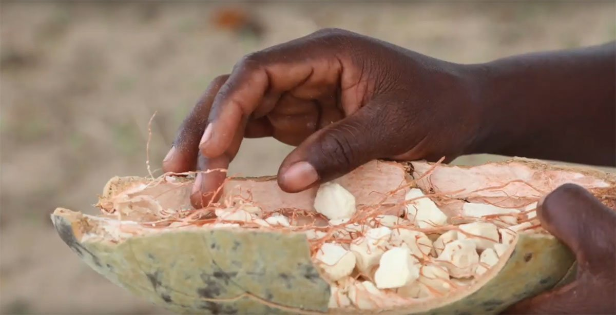 Baobab Superfruit  – Africa's Gift to You